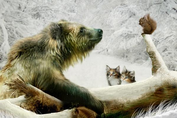 Medvedi A Veverky Jenzeny Cz