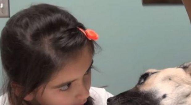 902405ec6fb Malá holčička se upřeně dívala do očí umírajícího psa. Až uvidíte konec  videa