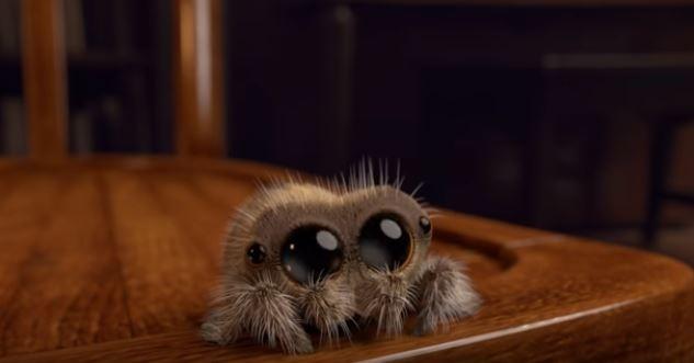 90ae05fe5f0 Bojíte se pavouků  Sledujte video a uvidíte