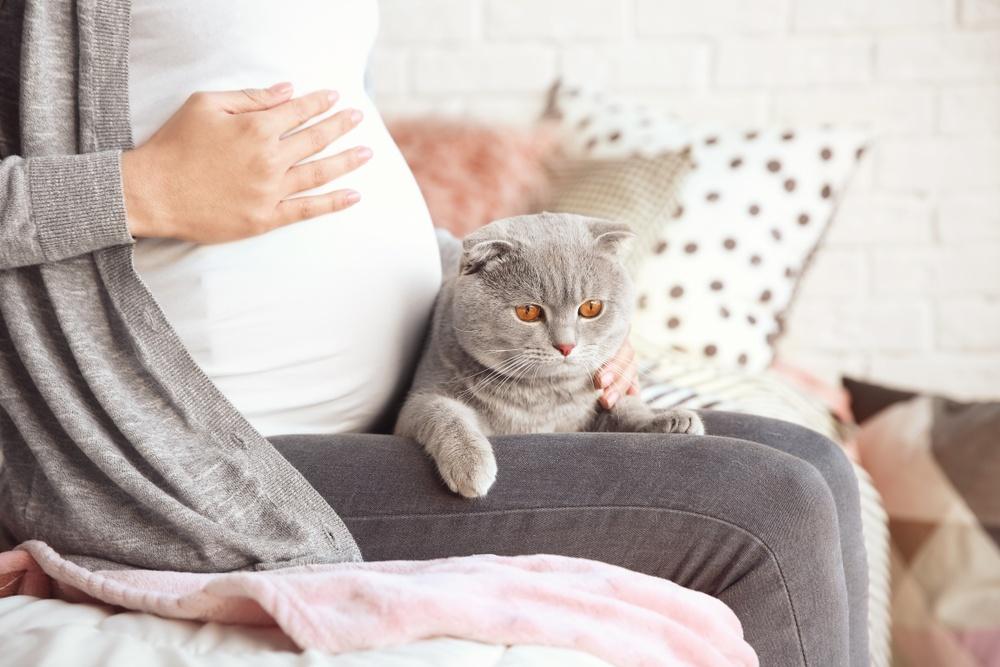 černá těhotná kočička videa