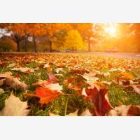 To, jak listy a celá příroda mění své barvy