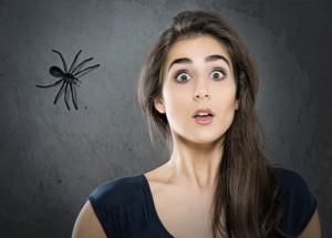 80d93df820a Bojíte se pavouků  Zbavte se své fobie díky jednoduchému triku!