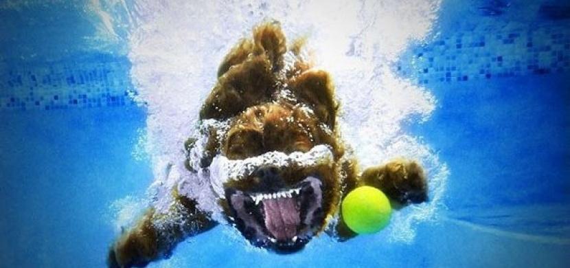 Úchvatné fotografie psů pod vodou