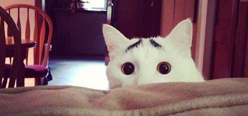 Kočky, které jsou slavné díky svým barevným odznakům