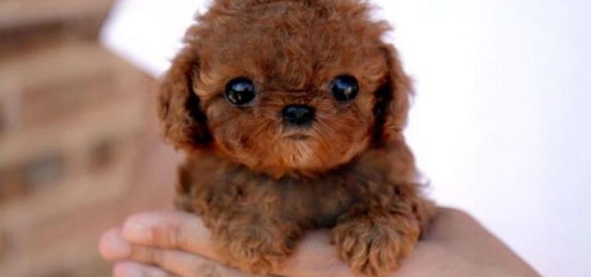 Nejroztomilejším psem se stává... aneb 26 nejroztomilejších pejsků internetu