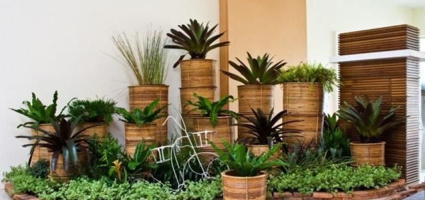 Pokojové rostliny, které vydrží vše