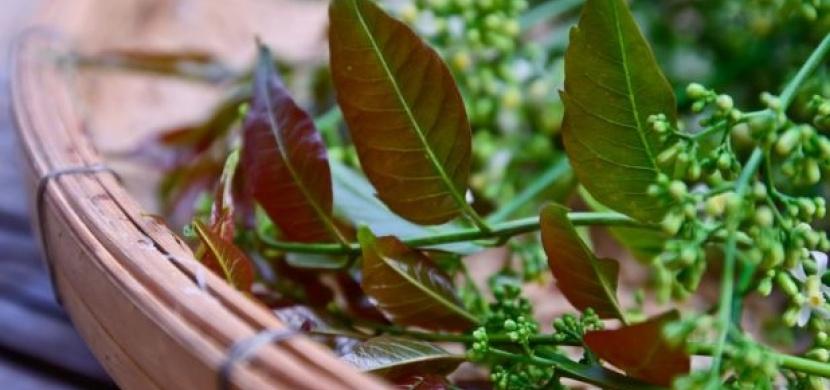 Neem – zázračný přírodní lék