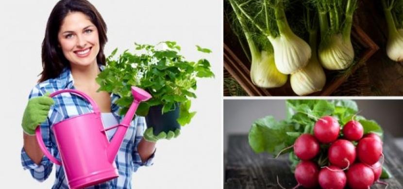 Tuhle zeleninu můžete pěstovat i doma v kuchyni