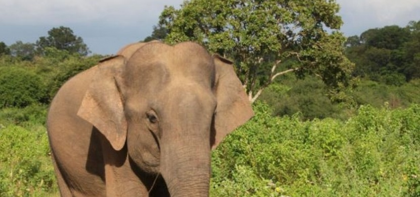 Srí Lanka: Na safari ve stylu Afriky