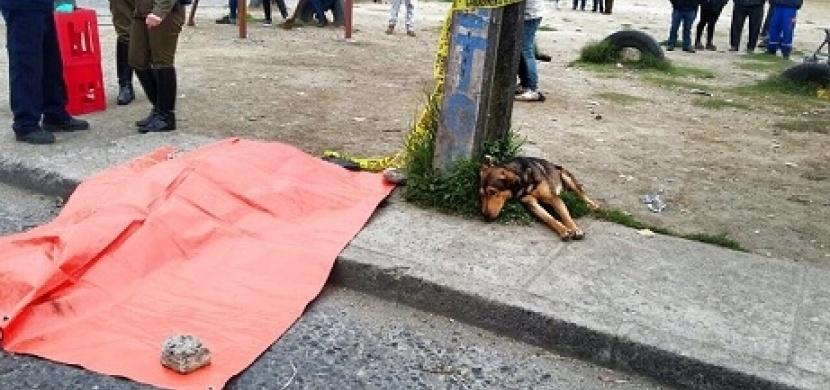 Srazilo ho auto a jeho pes se od něj nehnul ani na krok. Tyto fotky dojmou každého!