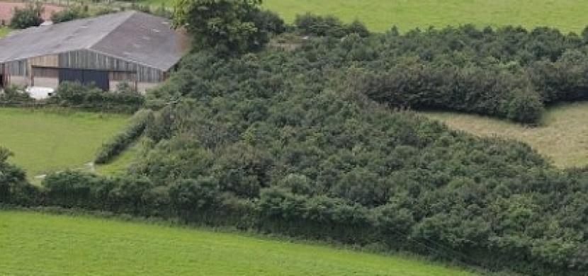 Po smrti své ženy vysázel 6000 dubů. Když se po 17 letech podívali na jeho pozemek, došla jim slova!