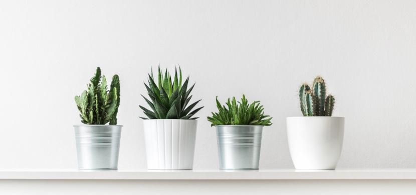 Domácí zálivka, po které vaše pokojové rostliny jen porostou