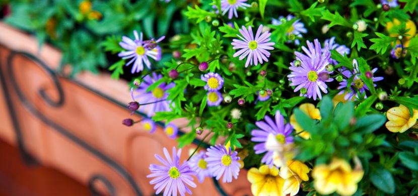 Nevíte jak pečovat o balkonové květiny? Máme pro vás 5 rad, které vám práci ulehčí