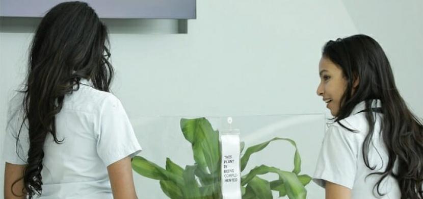 IKEA experiment: Co se stane, když budete 30 dnů šikanovat pokojovou rostlinu?