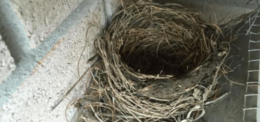 Čtyři roky bojoval s ptáky, kteří si u jeho domu každé jaro postavili hnízdo. Vyhrál tento boj?