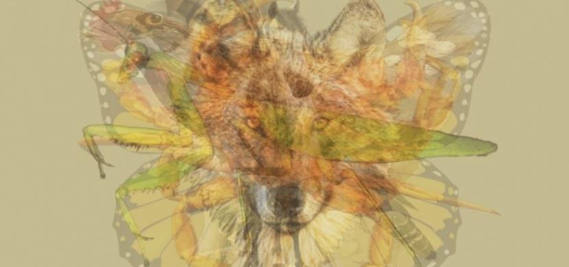 Jaké zvíře vidíte na obrázku jako první? Prozradí to vaše hlavní osobnostní rysy