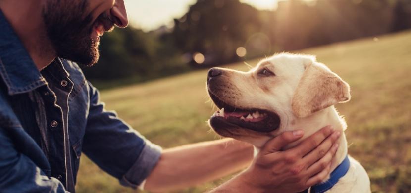 Pozoruje vás váš pes, když vykonává potřebu? Je to známka důvěry
