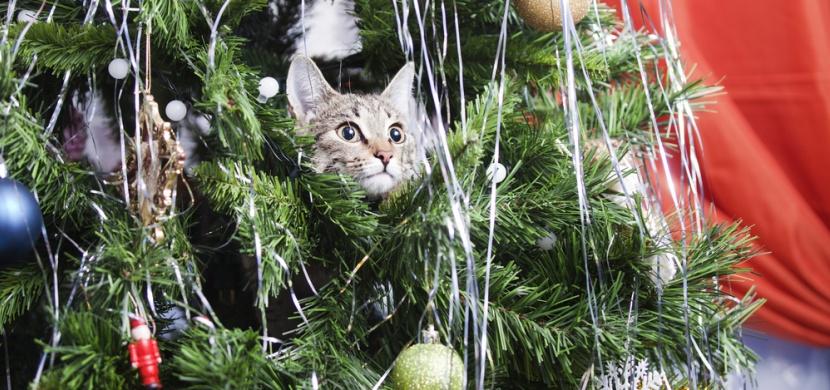 Abyste neměli Vánoce pod psa: Tyto nápady ochrání váš vánoční stromeček před domácími mazlíčky