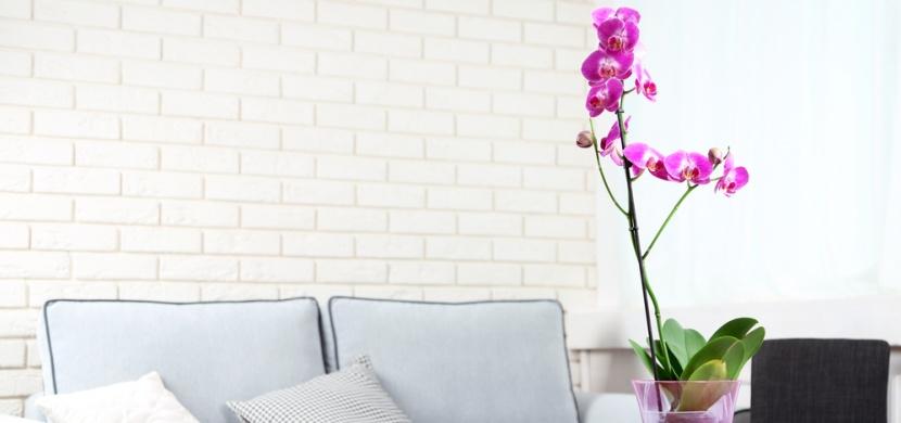 Nenáviděné i milované orchideje: Čím nám můžou ublížit?