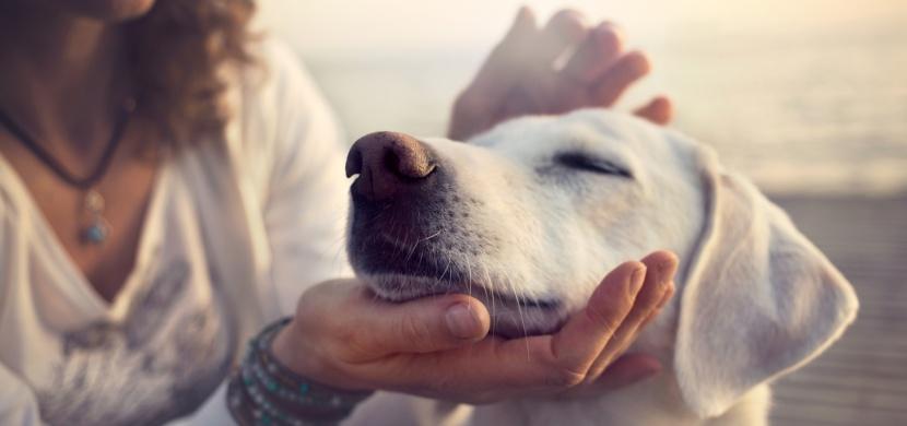 Dokážou psi odhalit špatného člověka?