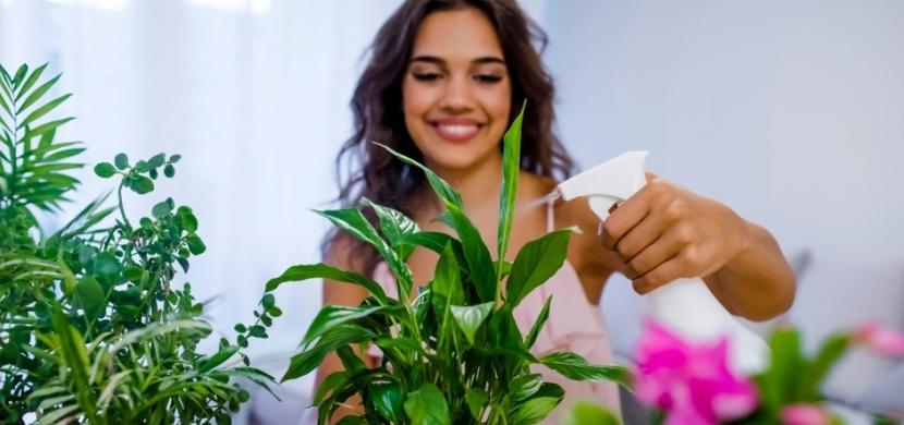 Pokojové rostliny, které čistí vzduch a vytvářejí dokonalé mikroklima: Které to jsou?