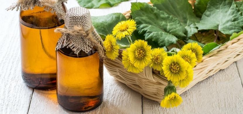 Sbíráte podběl lékařský na čaj nebo sirup? Vnitřní užití této jarní bylinky je v současnosti velmi sporné