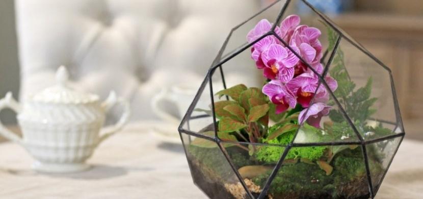 Znáte orchidejové kompozice? Smíšená výsadba orchidejí spolu s dalšími rostlinami oživí vaši domácnost