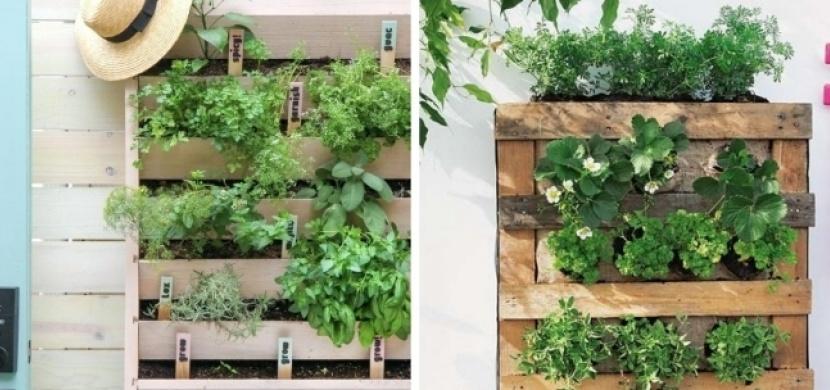 Poznejte kouzlo vertikálních záhonků: Pěstovat rostliny můžete i bez zahrady