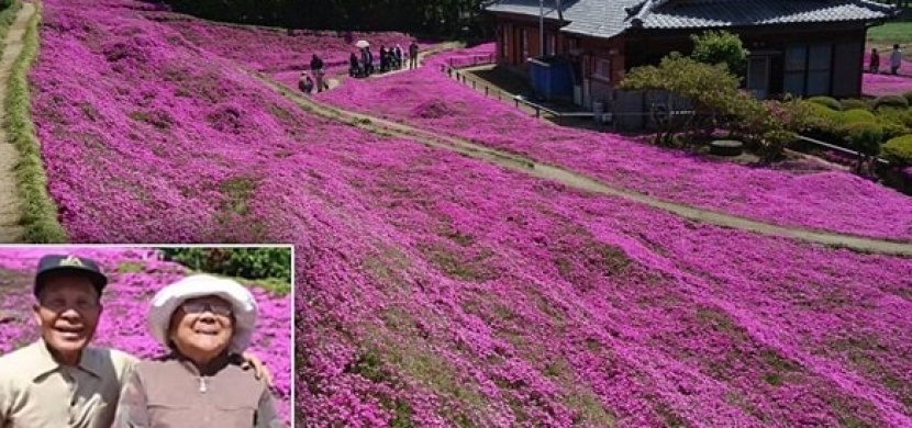 Pravý důkaz lásky, který se stal v Japonsku turistickou senzací: Milující manžel vybudoval své slepé ženě voňavou květinovou zahradu