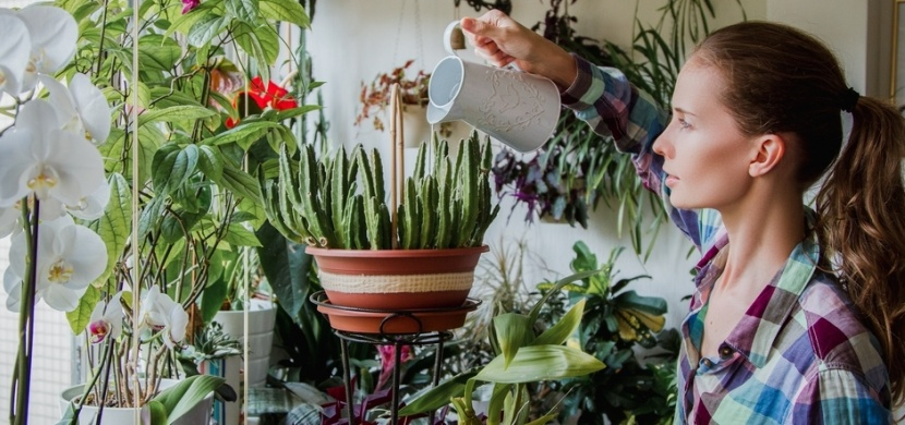 Jak se postarat o pokojové rostliny, když budete na dovolené? Nezvadnou vám díky těmto tipům