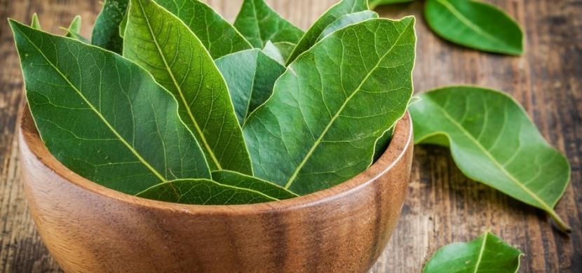 Bobkový list jako přírodní repelent: Ochrání vás před dotěrným hmyzem i hmyzími škůdci
