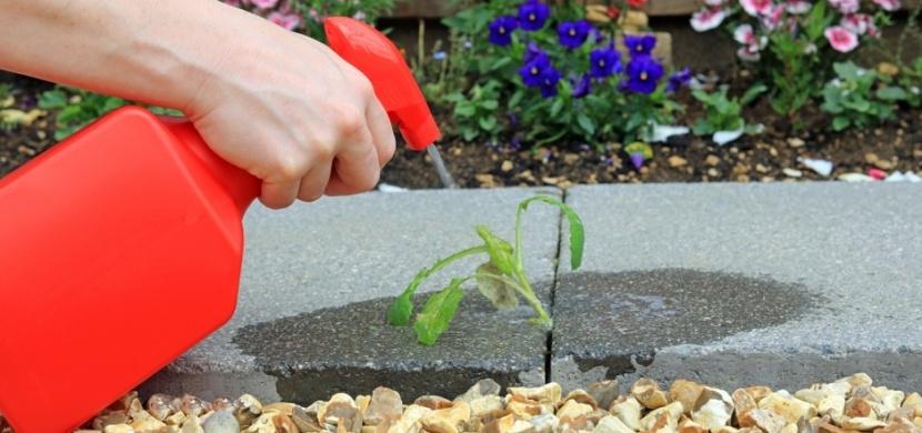Zbavte se plevelu přírodní cestou: Známe bio alternativu chemických herbicidů