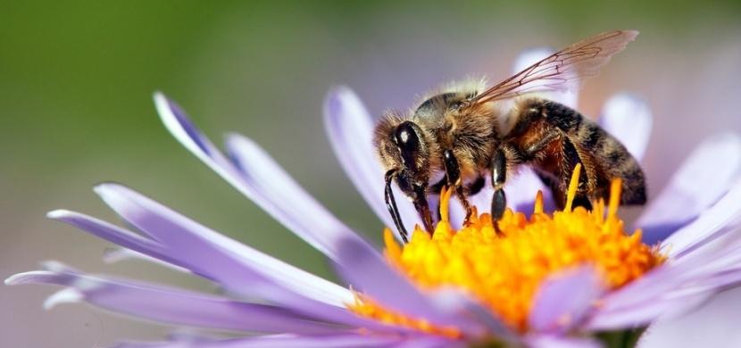 Vyčerpaným včelám můžete pomoci i vy. Nechte jim na zahradě či balkóně lžičku s cukrem