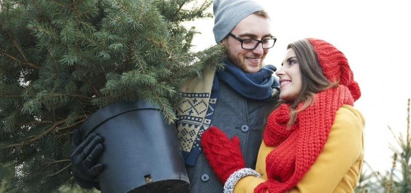 Jak se starat o vánoční stromeček v květináči po svátcích: Přemístěte jej do chladna a na jaře přesaďte
