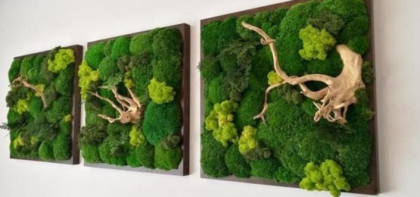 Obrazy z mechu jako nový trend: Pusťte se do tvoření a pozvěte k sobě domů přírodu