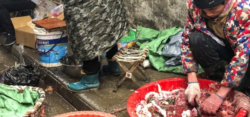 Záběry z wu-chanské tržnice: Obchodování s divokými zvířaty a žalostná hygiena