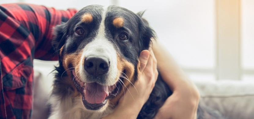 Většina Čechů si myslí, že psi vidí černobíle. Jakým dalším mýtům o domácích mazlíčcích lidé věří?