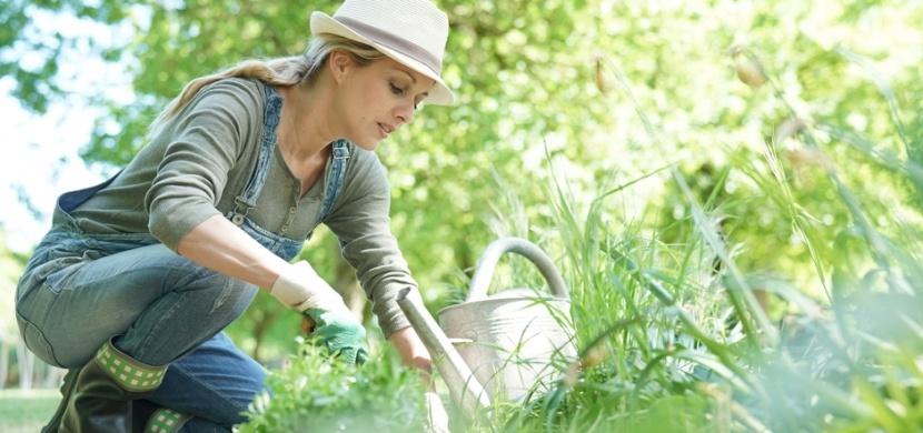 Co dělat na zahradě v dubnu: Zvertikulujte trávník, vysejte ředkvičky nebo přihnojte jahody