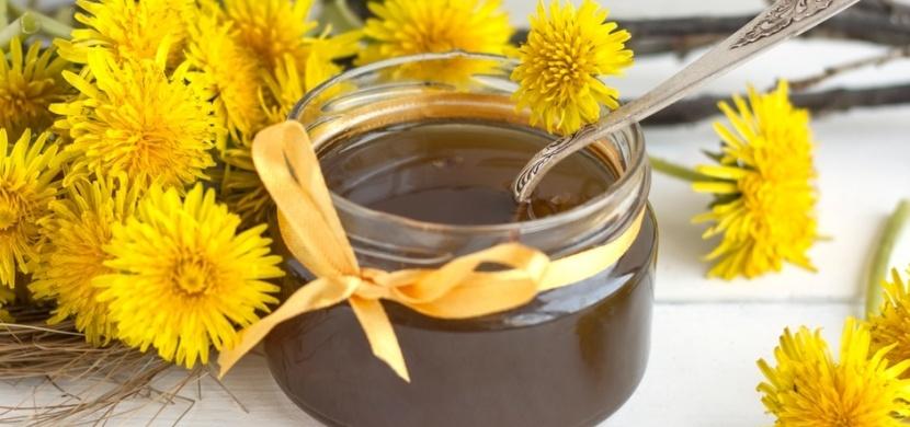 Smetánka lékařská je v plném květu: Vyrobte si pampeliškový med nebo sirup