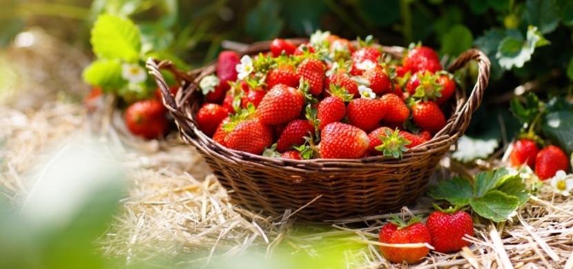 Hnojení jahod: Kdy a čím hnojit, abyste měli bohatou sklizeň