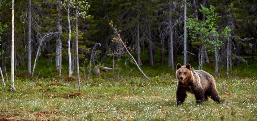 12letý chlapec Alessandro přelstil v Dolomitech medvěda. Video ukazuje, že nezpanikařil a zachoval klid