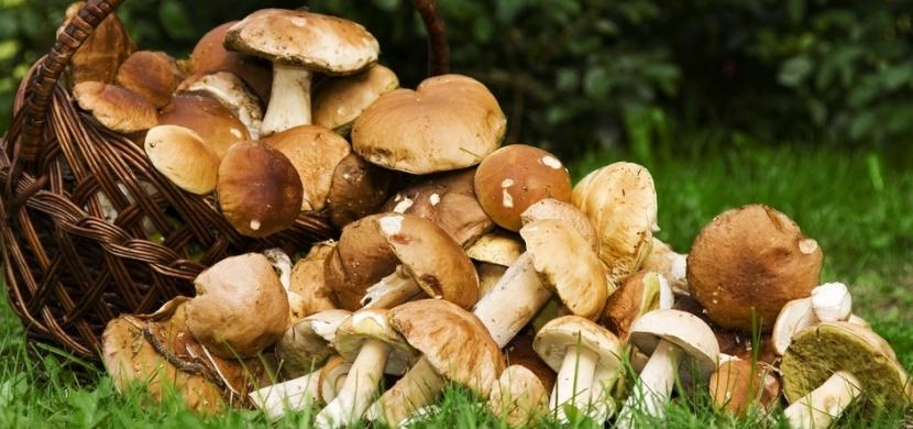 Kam na houby? Houbařská sezona 2020 odstartovala už v červnu, těšte se na plné košíky