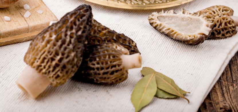 Smrž obecný je velmi chutnou jarní houbou. Pozor na jeho záměnu s jedovatým ucháčem