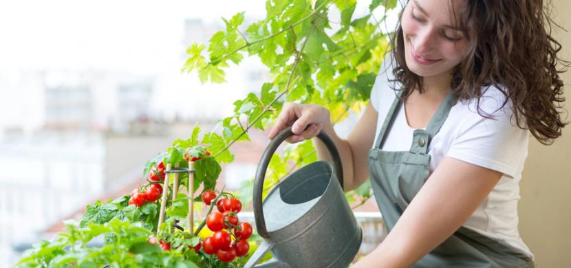 Zahrádka na balkoně: Vypěstujte si bohatou úrodu zeleniny, ovoce i bylinek