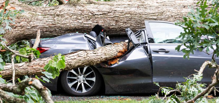 Při bouřce na Písecku zabil padající strom muže a ženu v autě. Bezprostředně před smrtí pomáhali rodině ukrýt se před bouří